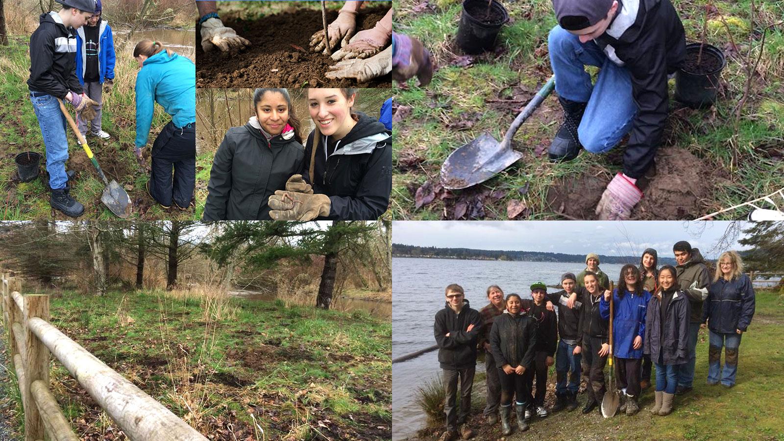 Students planting trees in Kirkland WA